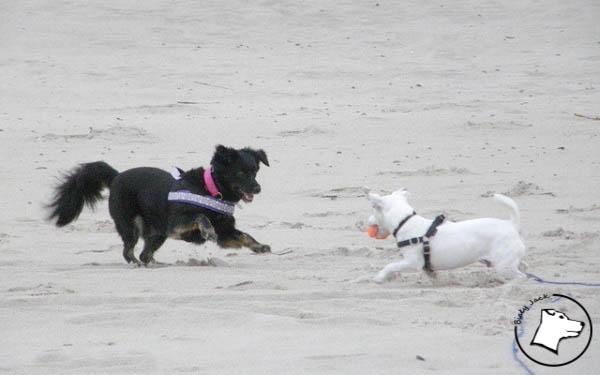 Psie przyjaźnie i znajomości
