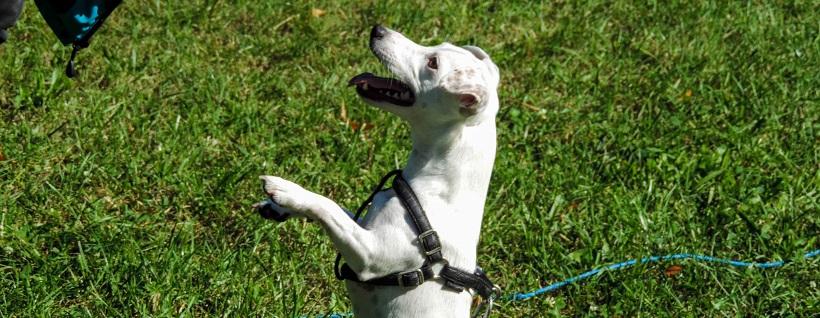 Mięśnie, równowaga, świadomość ciała u psa – filmik