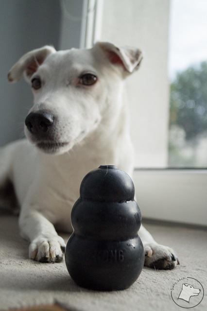 kong, psie rzeczy