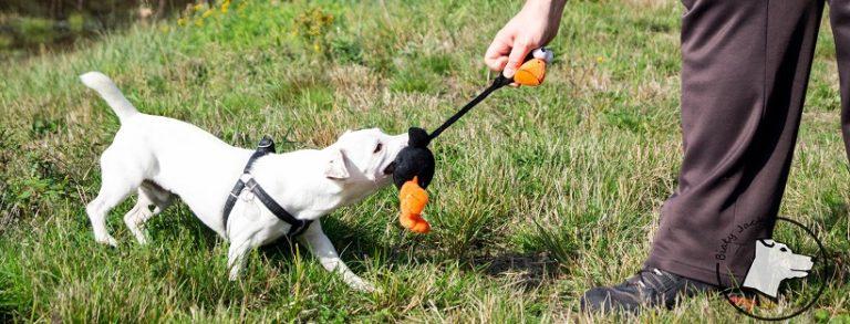 Przeciąganie z psem, czyli temat – rzeka