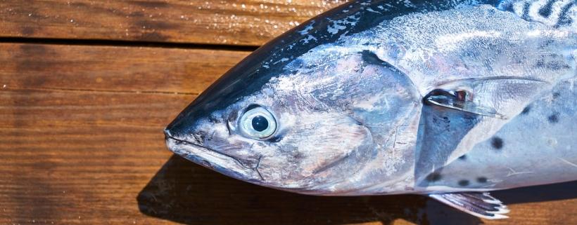 Ryby w psiej diecie