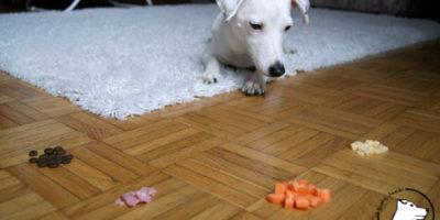 Co może jeść pies? Owoce i warzywa w diecie psa