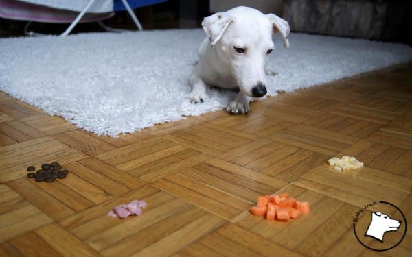 pies może jeść