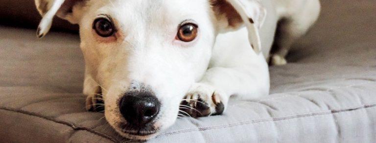 Pies a łóżko – wpuszczać czy nie?