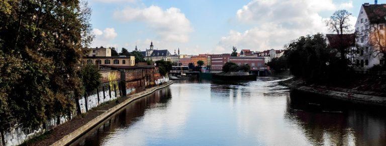 Dwa psy zwiedzają Wrocław