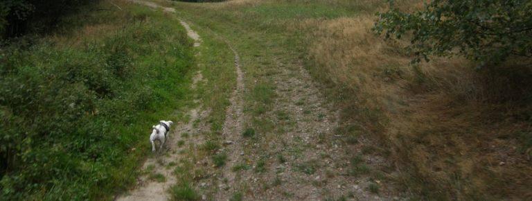 Pies w lesie – prawo i przepisy