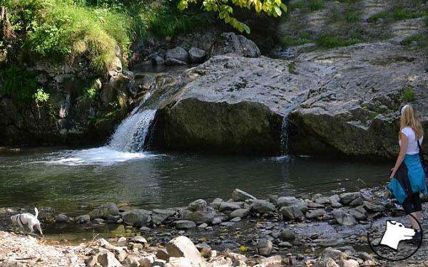 Pies w Pieninach: rezerwat Biała Woda