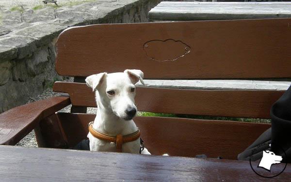Z psem w Dolinie Chochołowskiej