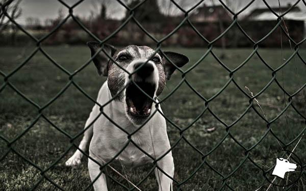 Pies morderca, czyli… właściciel idiota