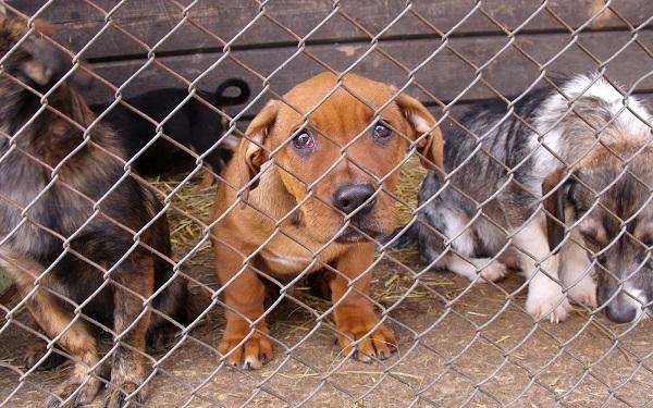 Pomaganie zwierzętom a decyzje sumienia