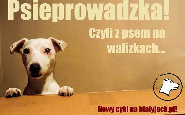 Psieprowadzka, czyli z psem na walizkach – zapowiedź!