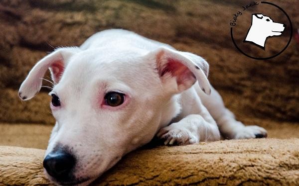 Pobudliwy pies i uspokajający dotyk