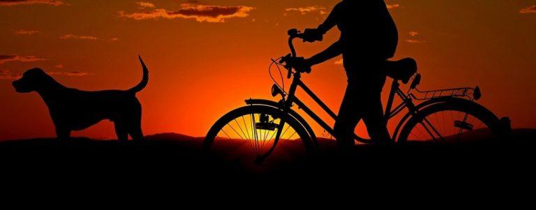 Psiarz kontra rowerzysta i biegacz