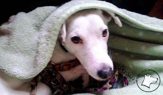 Pies w pociągu – część 1