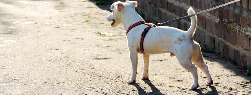 Rutyna – czy pies potrzebuje jej w życiu?