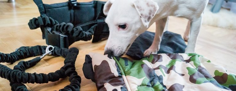 Psia górska walizka – co zabieramy?