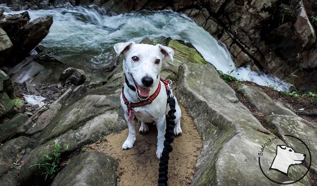 Góry z psem: Przehyba ze Szczawnicy