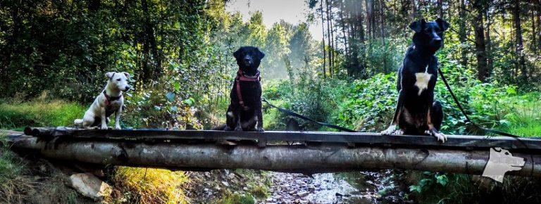 Psie zabawy i zachowania