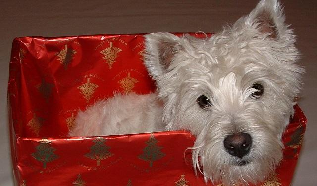 Pies jako prezent dla dziecka