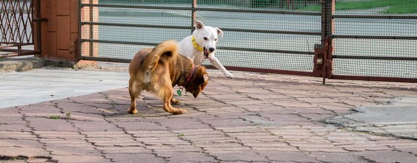 Czy pies musi lubić inne psy?