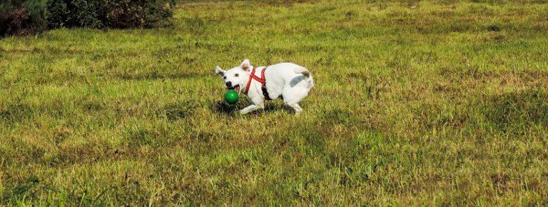 TOP 10 – piłki dla psów