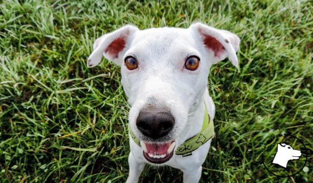 5 rzeczy, które robię inaczej przez wzgląd na psa