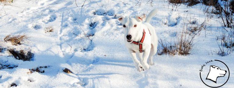 Zaginął pies – co zrobić, aby go odnaleźć?