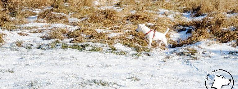 Mój pies niszczy – to powód do dumy?