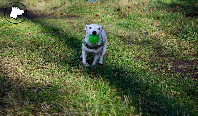 TOP 10 – mity na temat ras psów