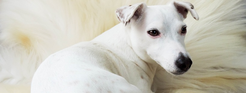 Wyjazd z psem – mały savoir-vivre