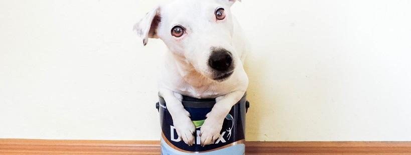Remont, remont – a co z psem?