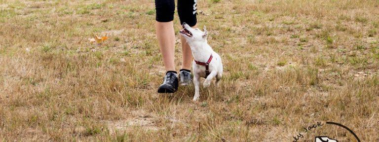 Wychowanie psa – konsekwencja