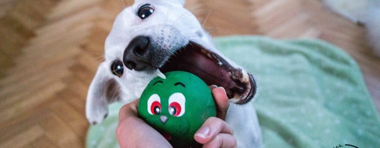 Nasze TOP 10 psich produktów