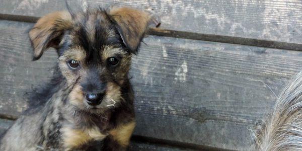 Świadoma adopcja cz. 4 – złe powody adopcji psa