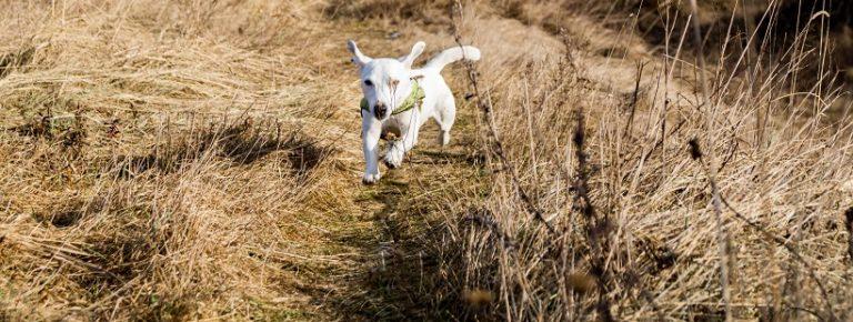 Sztuczki – po co uczyć ich psa?