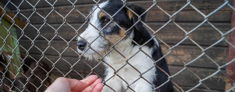 Psy do adopcji – schronisko w Zamościu [nieaktualne]