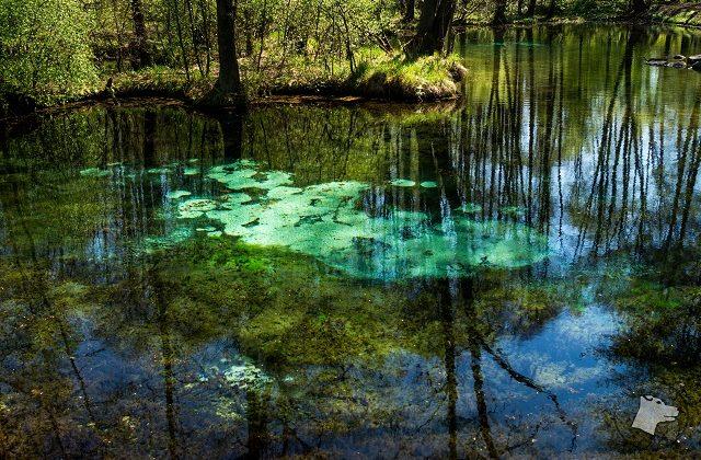 Rezerwat Niebieskie Źródła