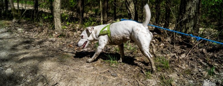 Dzień Psa i nasze ulubione zdjęcia Małego Białego