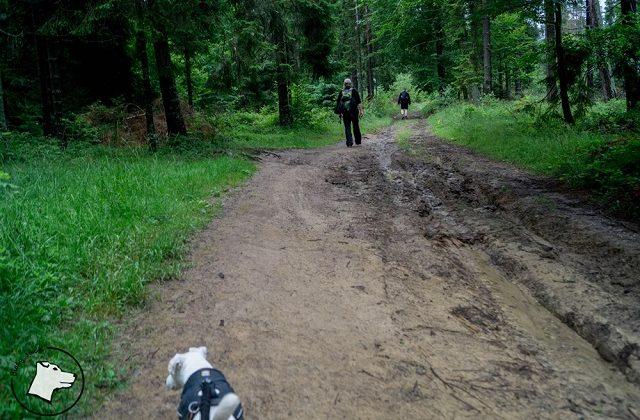 Zejście do Przełęczy Rozdziela