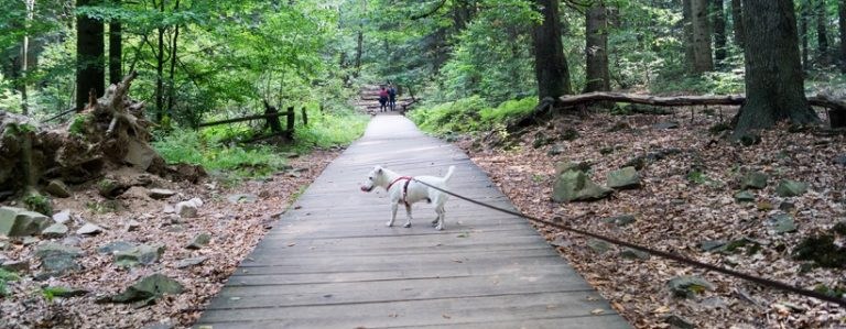 Góry Świętokrzyskie z psem: Święta Katarzyna – Łysica