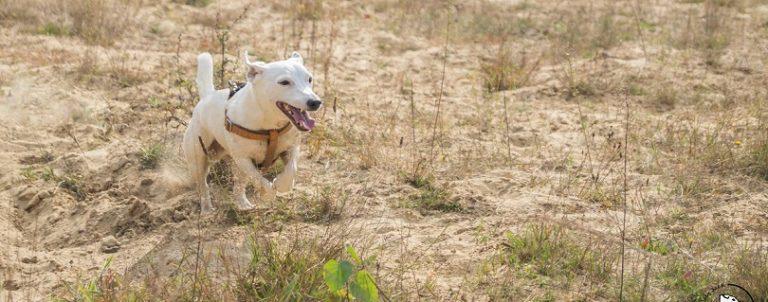 Aktywny pies – kiedy aktywność staje się przekleństwem