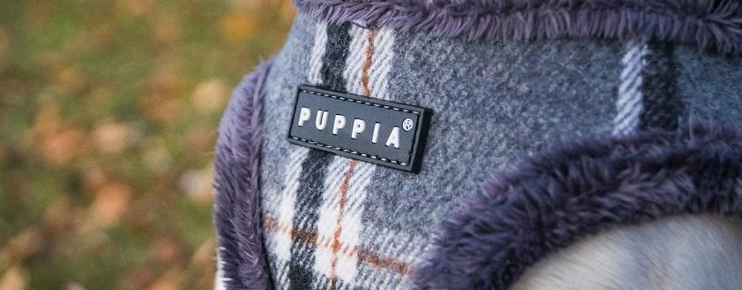 Ubrania dla psów – krótki przewodnik
