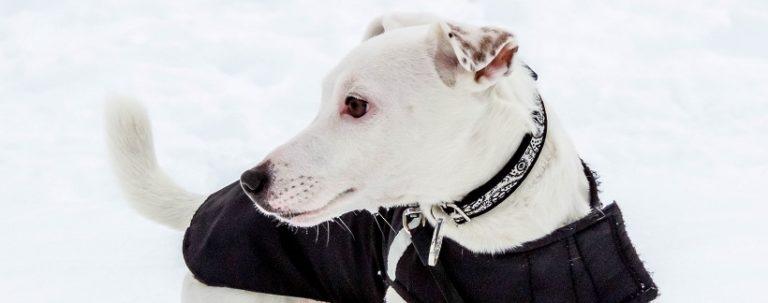 Ubrania dla psów – i święta wojna wokół nich