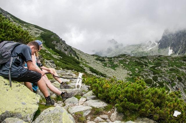 batyżowiecki staw, w góry z psem