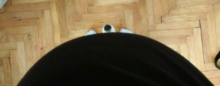 TOP 10 – psie bzdurne mity dla kobiet w ciąży