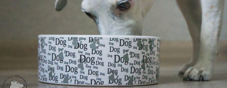 Miska dla psa – jak ją wybrać?
