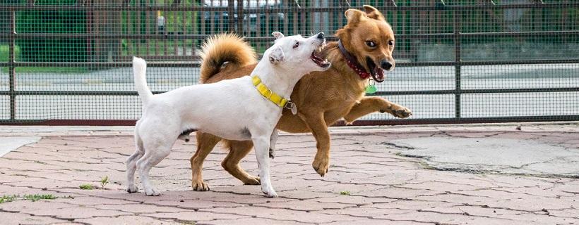 Absurd wokół wybiegu dla psów