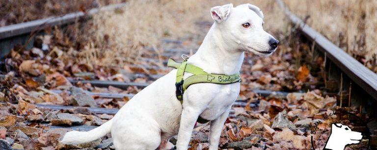 Szczepienie psa – ważny temat. Czy warto szczepić psa?