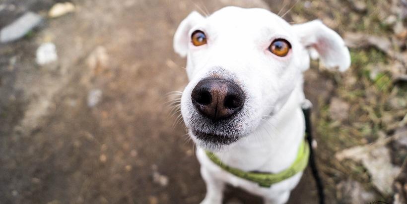 TOP 10 – typy psich głaskaczy