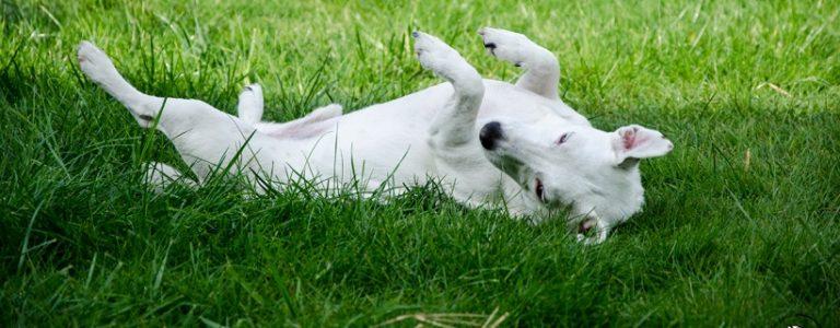 Kastracja psa – mity o kastracji | TOP 10